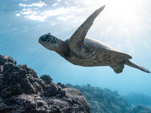 CATLANTE PLONGÉE – Images sous-marines – Film promotionnel croisière Caraïbes