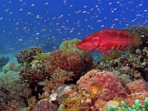 SHOWREEL 2020 – Vidéo sous-marine / Cadreur professionnel